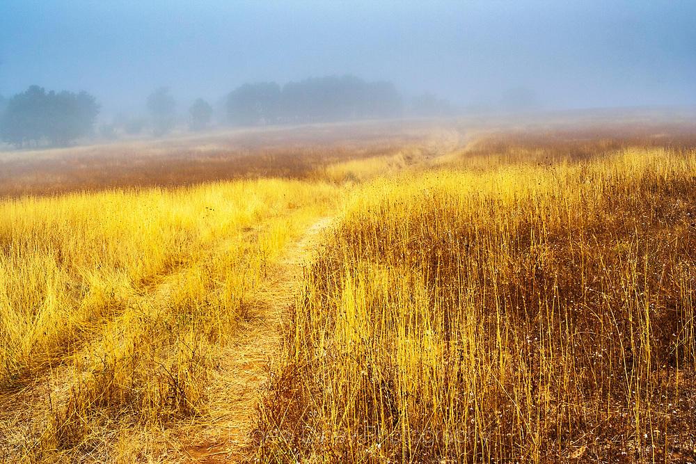 Сакар в мъгливо лятно утро