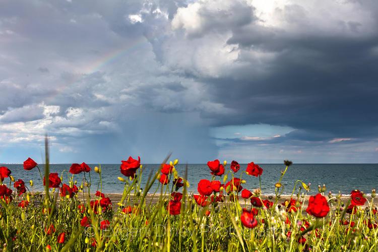 Макове и бурно небе