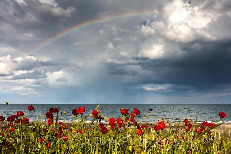 Дъга над макове край плажа