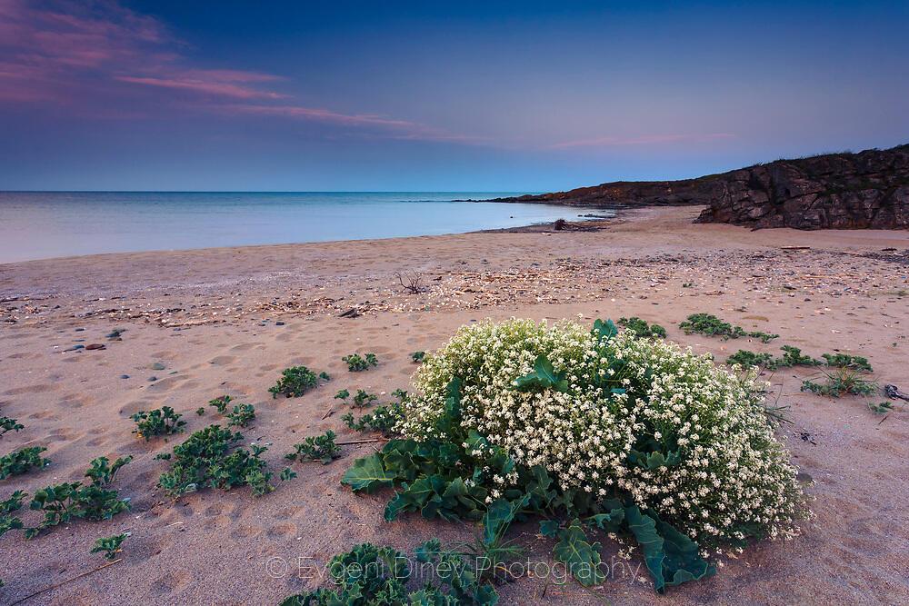 listi beach