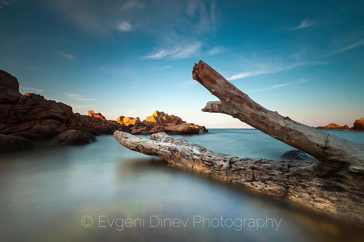 Дърво довлечено на брега