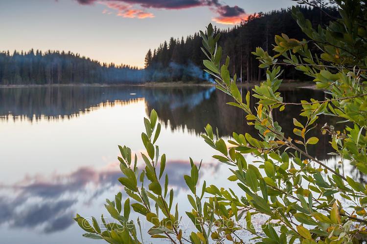 Храст край езерото
