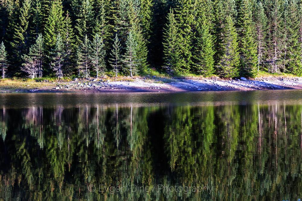 Отражение на борова гора в езеро