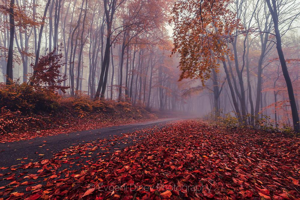 Път в мъглива есенна гора