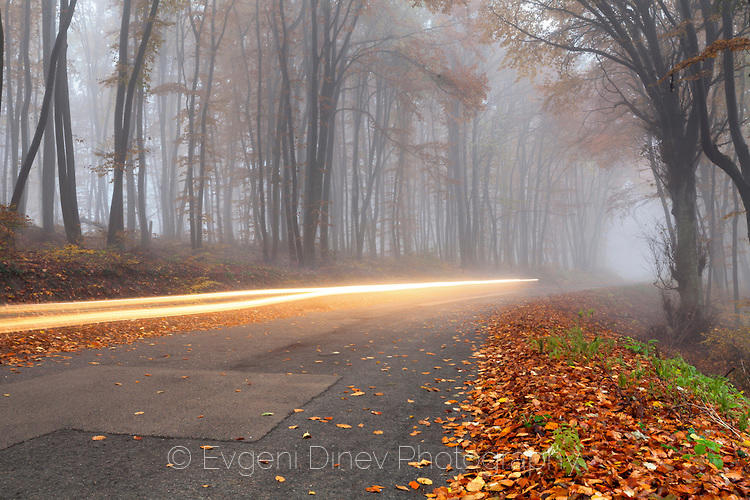 Следа от фарове по мъглив горски път