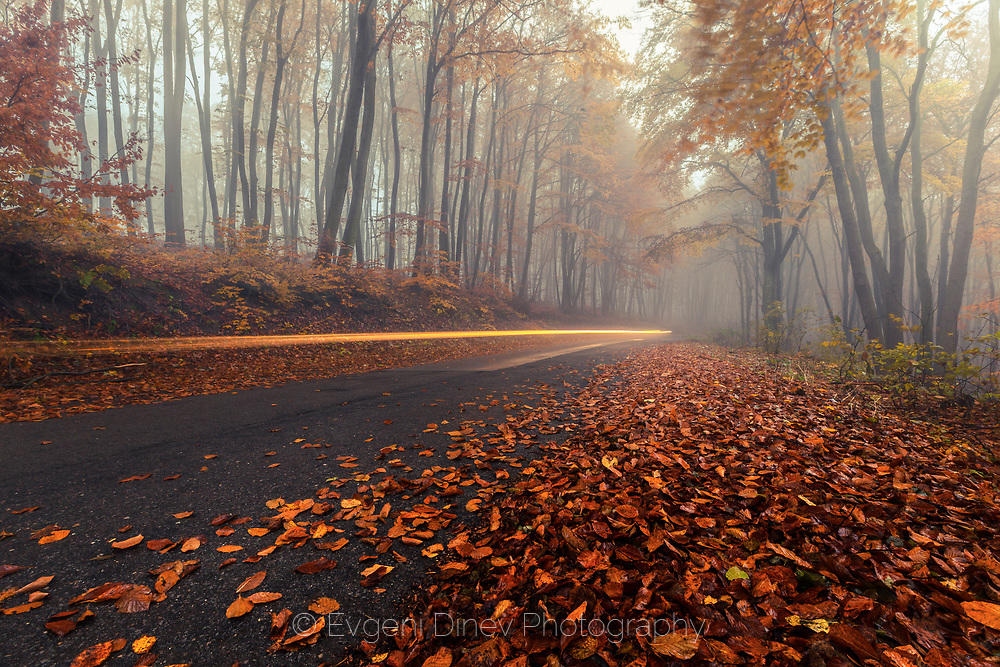 Мълния в гората