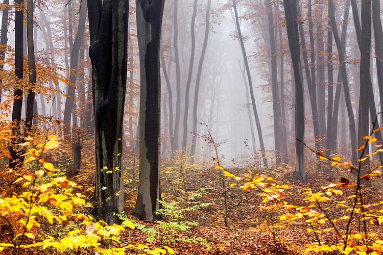 Загадъчна гора