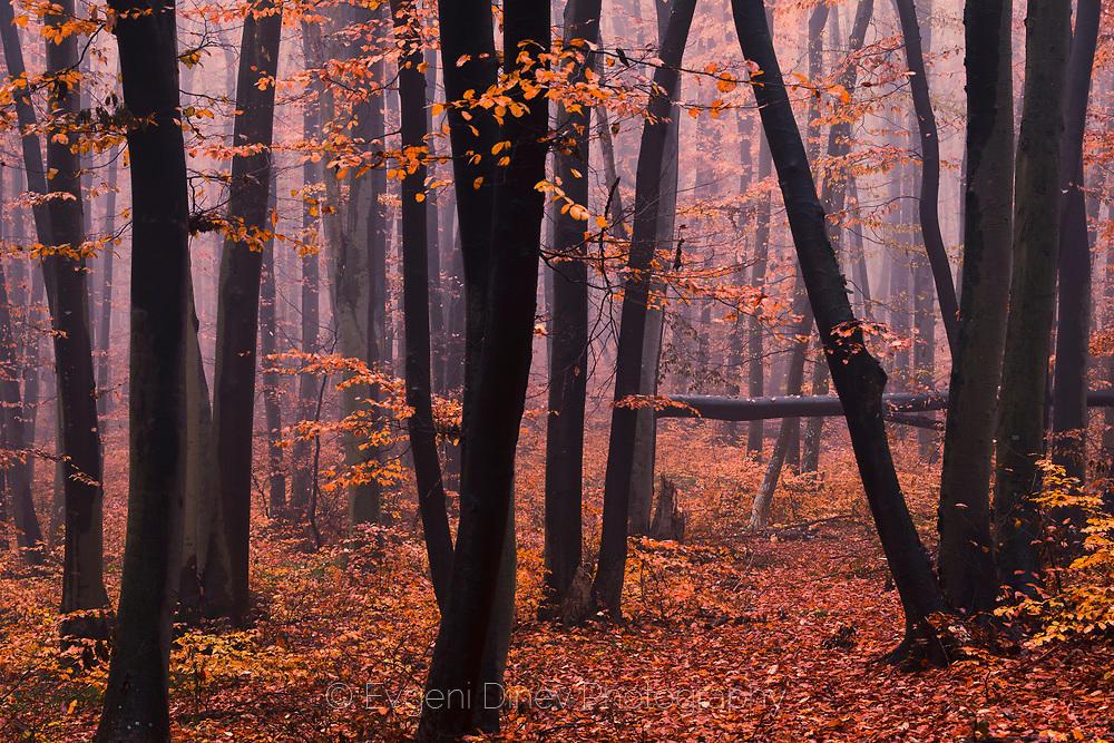Буква А в гората