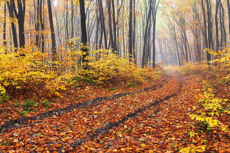 Път в шумата