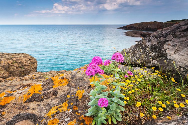 Диви цветя край брега