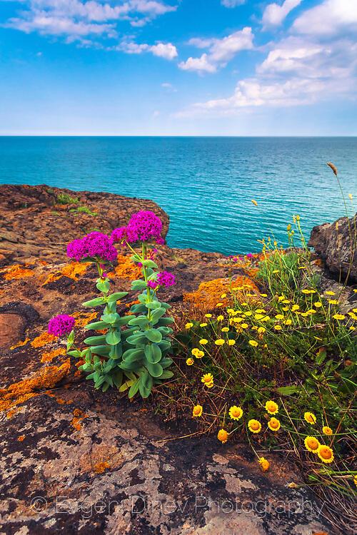 Розови и жълти цветя край брега на Силистар