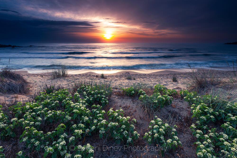 Бели цветчета на плажа