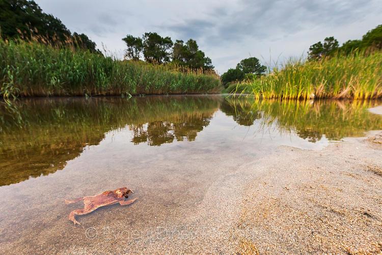 Жаба в река