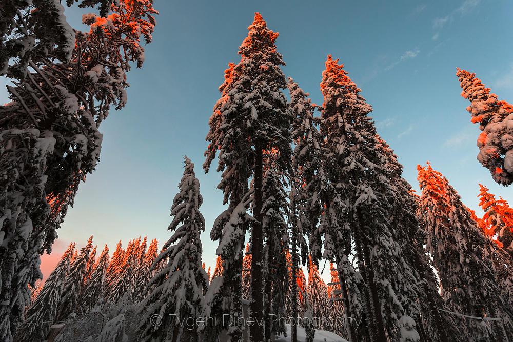 Снежна гора с огрети от изгрева върхове
