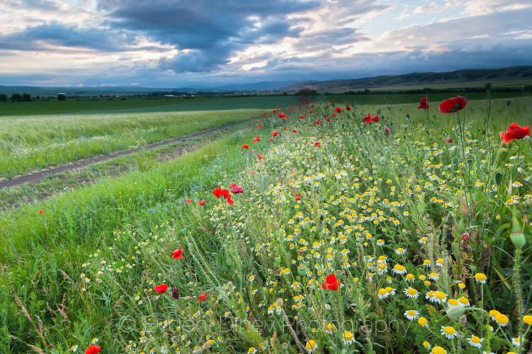 spring-field