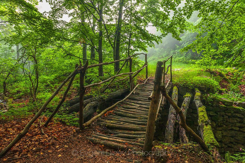 Дървено мостче в гората