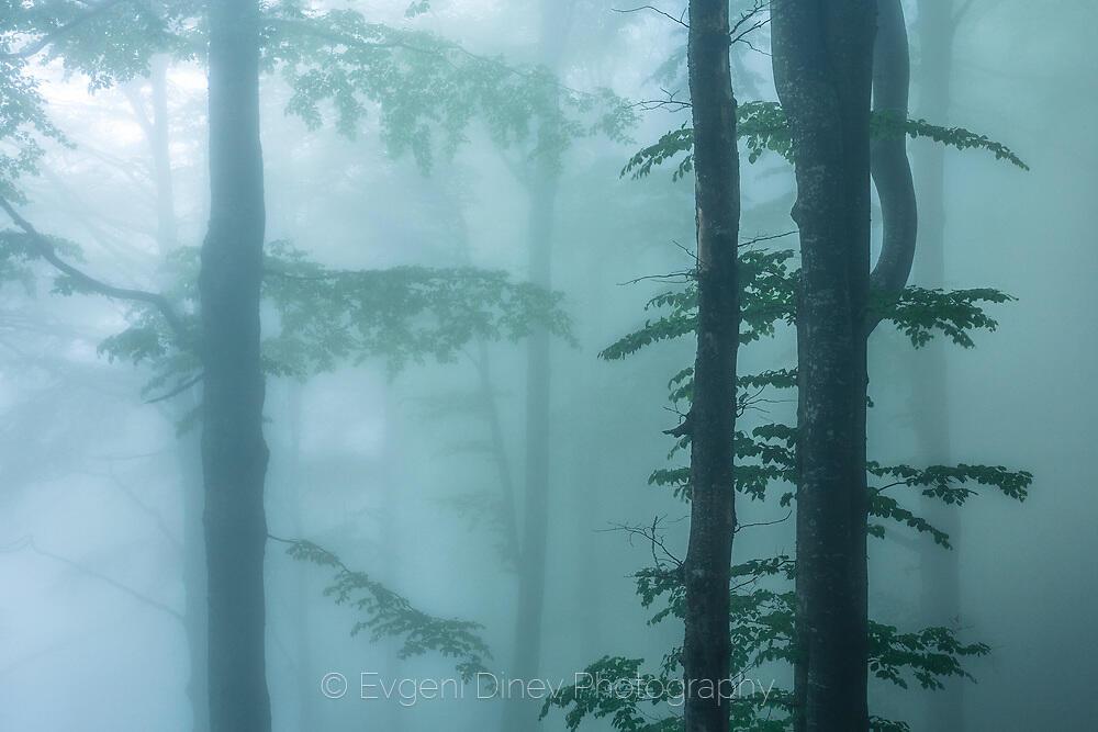 Потъване в мъглата