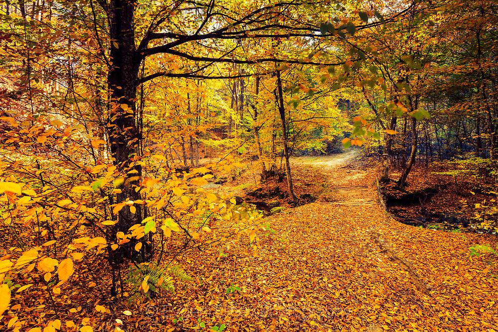 Слънчева есенна гора