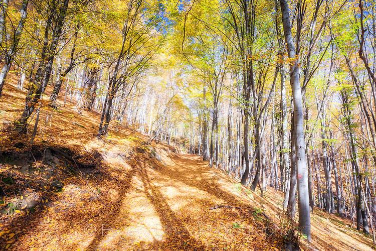 Есенни сенки