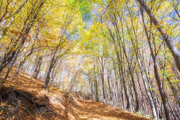 Горски път в Средна Гора