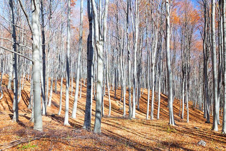 Окапала есенна гора