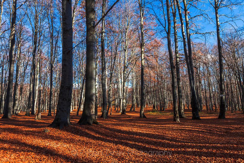 Среднгорска букова гора