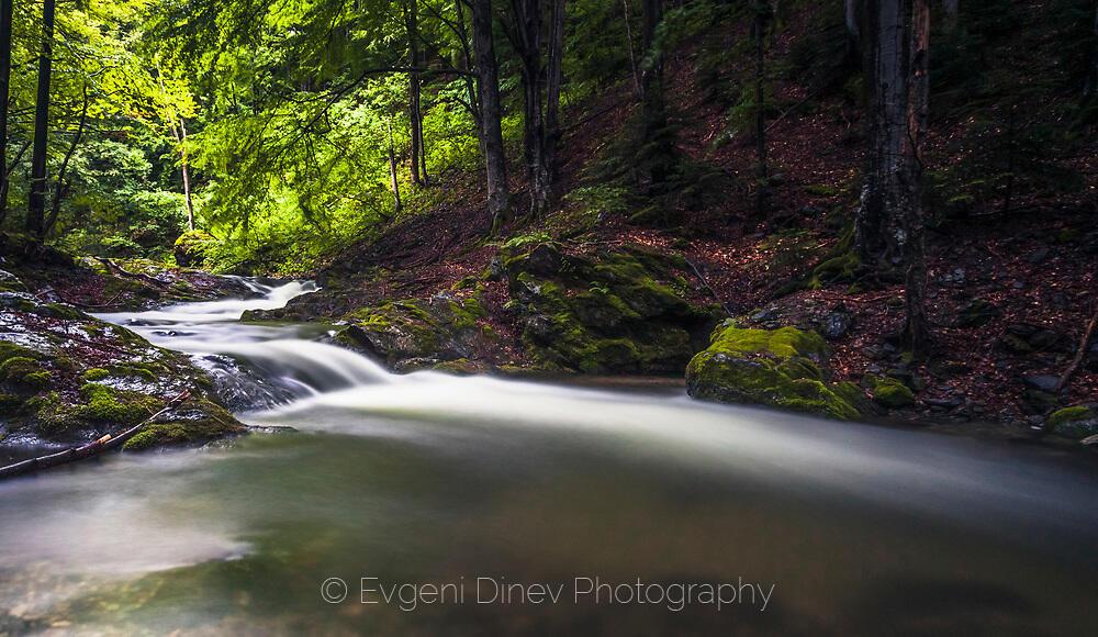 Буйна река в букова гора