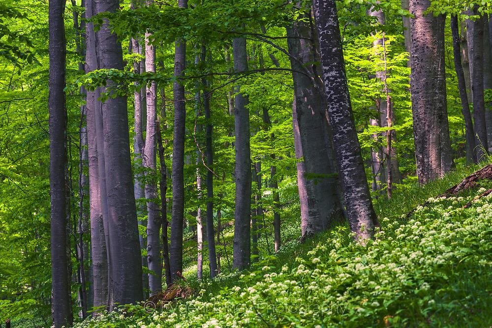 Красива гора в резерват Стенето