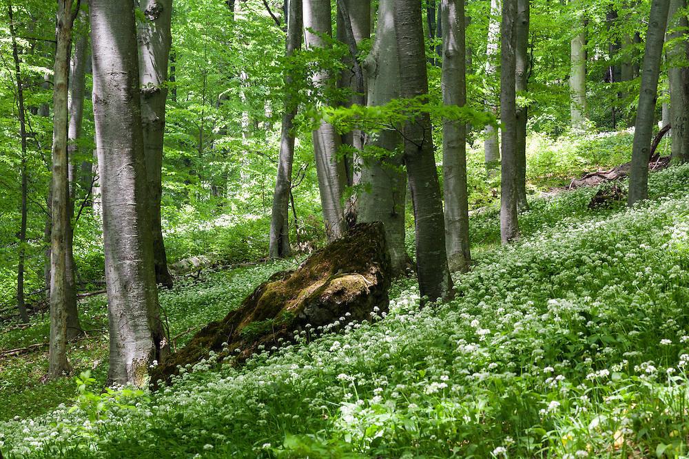 Поляна в резерват Стенето