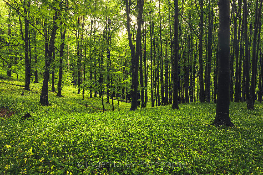 Зелена гора