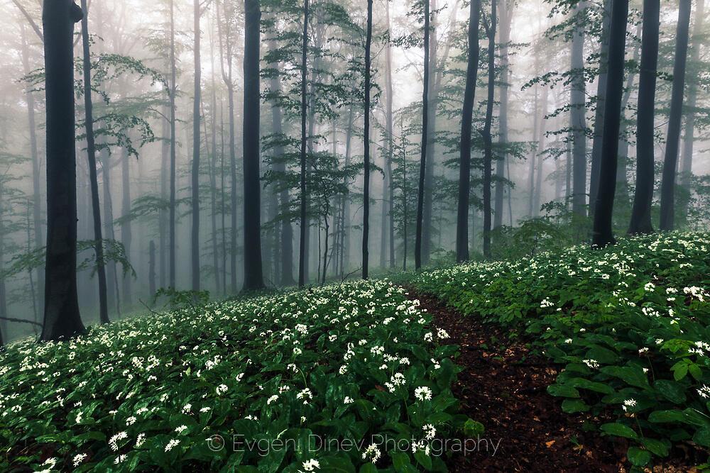 Пътека в мъглата