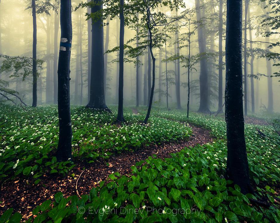 Пътечка в пролетна гора