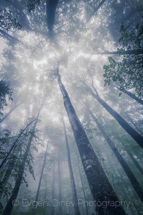 Гиганти в мъглата