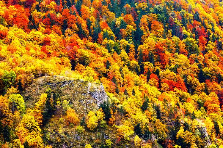 Пъстра есенна гора в резерват Стенето