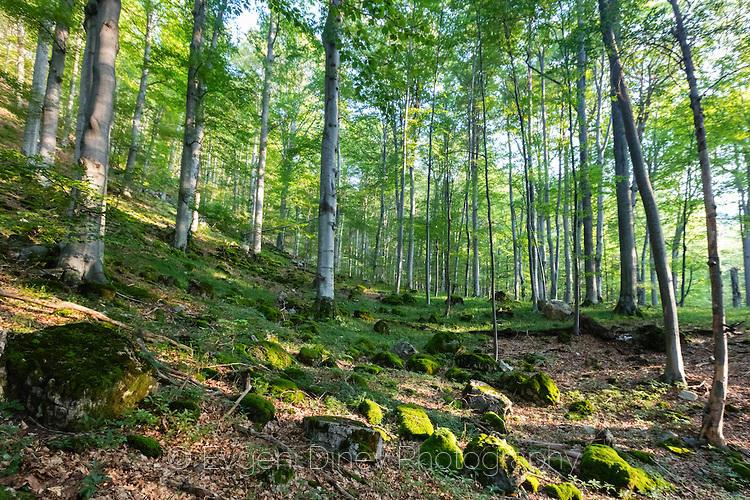 Камъни в гора, покрити с мъх