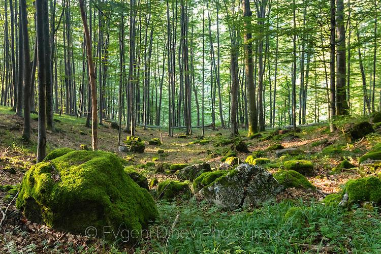 Камъни покрити с мъх