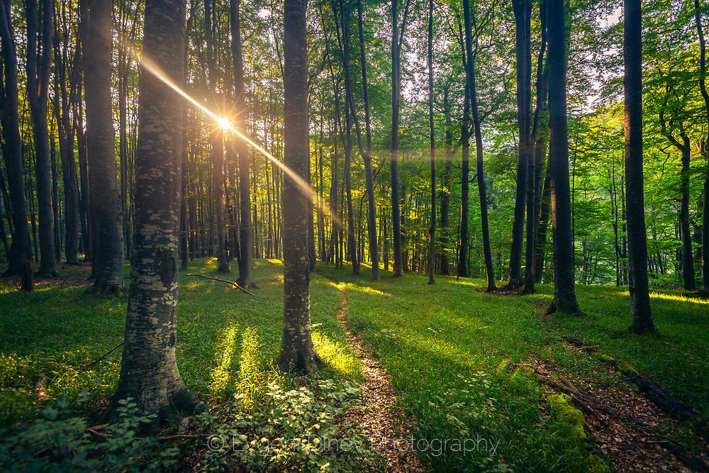 Сутрин в резерват Стенето