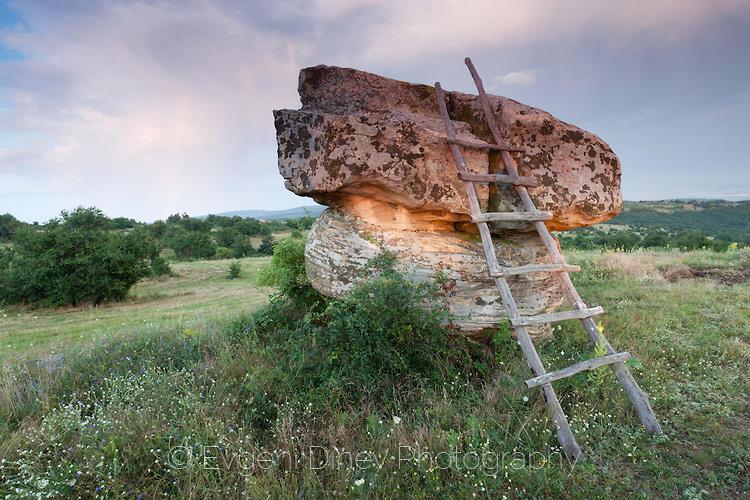 Скална гъба в източния Балкан