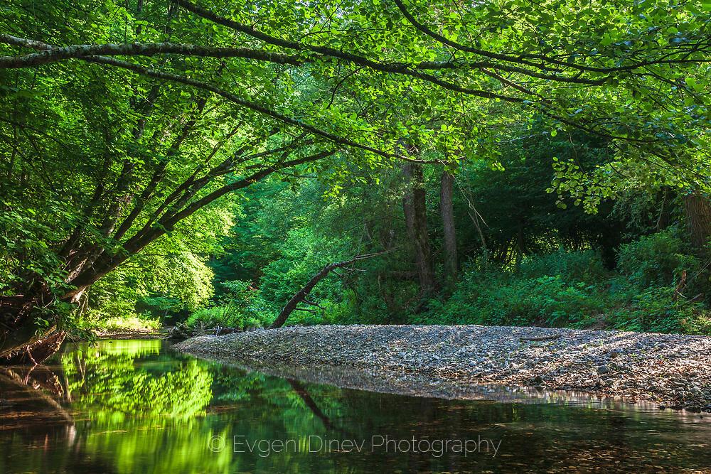 Зелени отражения в реката