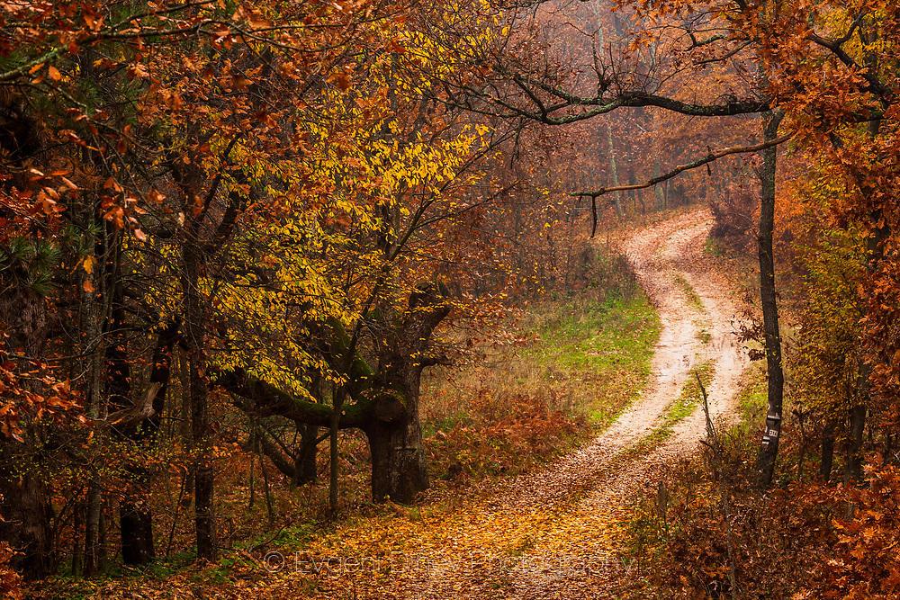 Път в есенна гора