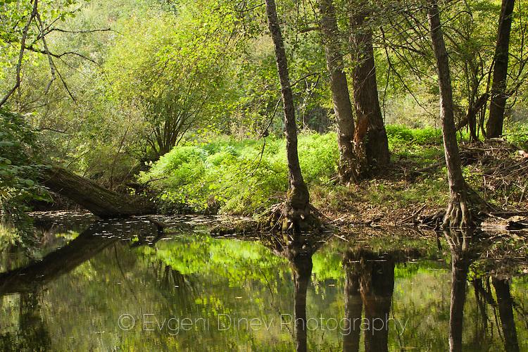 Отражения в реката