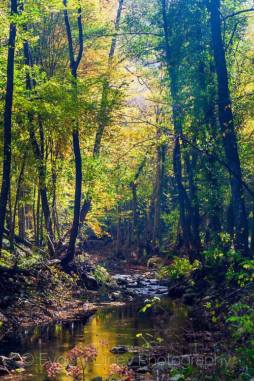Река в резерват Витаново