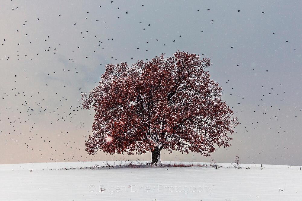 Червено дърво на снежна поляна