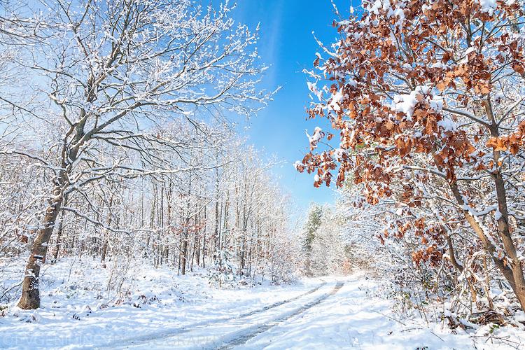 Зимна картина от Странджа