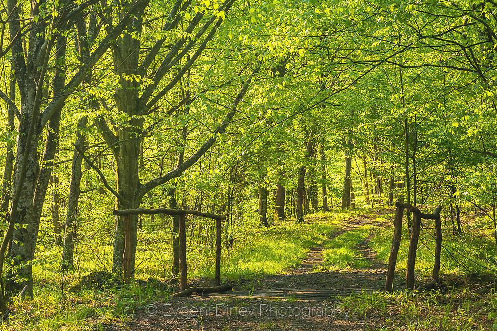 Пролетна гора в Странджа