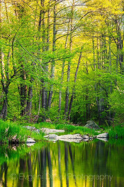 Пролетна гора и река