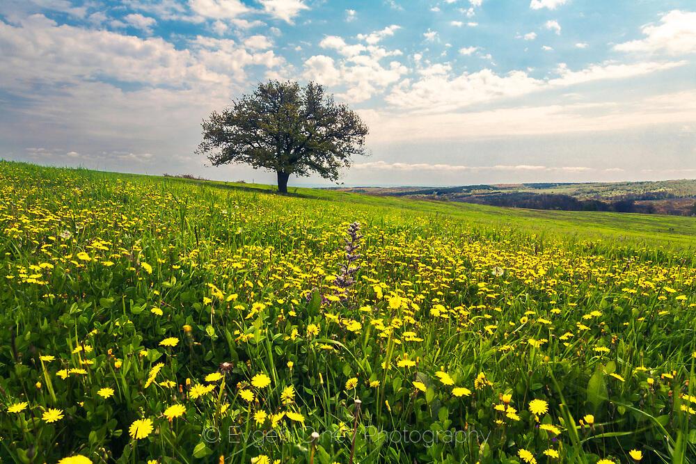 Пролетна поляна с жълти цветчета