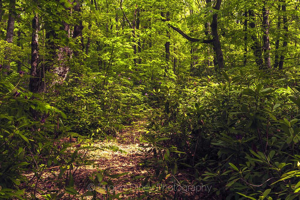 Буйна зеленика в резерват Узунбуджак