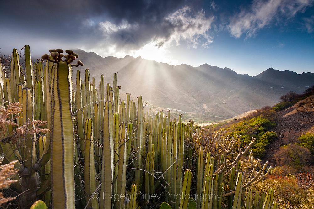 Долината на Кактусите