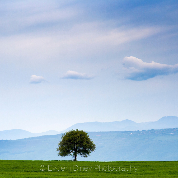 Дърво на зелена поляна